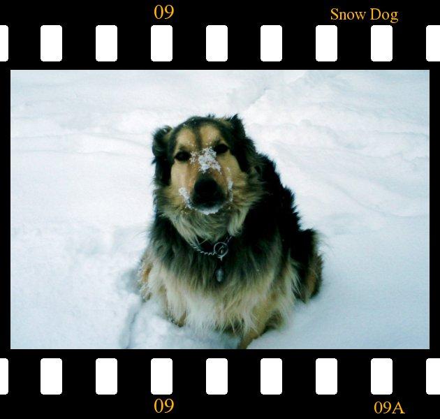 snowdogslide.jpg