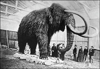 Milk Mammoth 'Bella' circa 1903